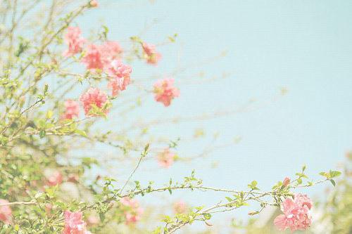 《仵作小娇娘》小说章节目录全文免费阅读